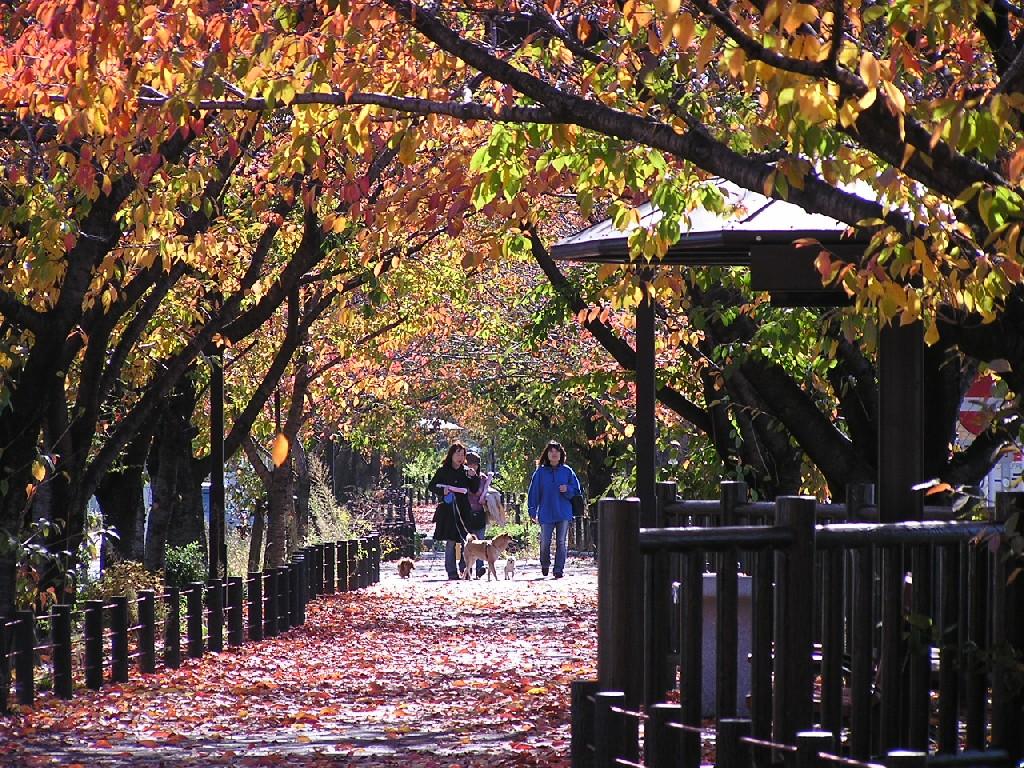 水道路の紅葉
