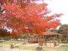 朝宮公園の紅葉