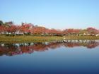 落合公園の紅葉