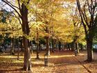 ふれあい緑道の紅葉