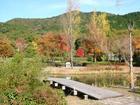 緑化植物園の紅葉