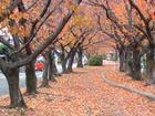 水道道(尾張広域緑道)